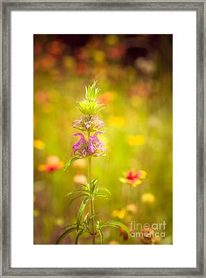 One Spring Day In May Framed Print