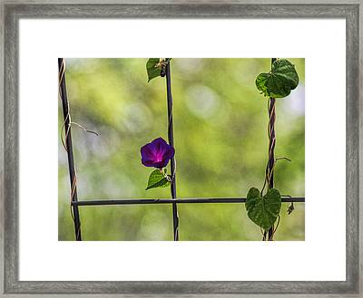 One Framed Print by Tammy Espino