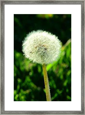 One Thousand Wishes Framed Print by Andrea Dale