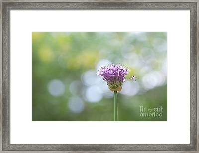 One To The Side Framed Print by Kay Pickens