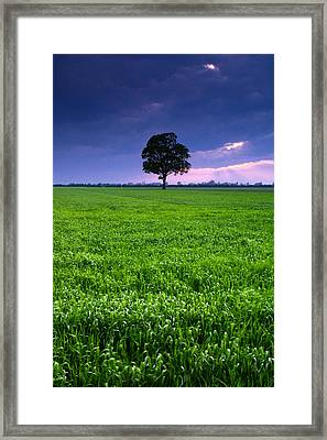 One Tree Framed Print by Cale Best