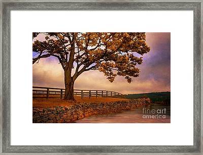 One Tree Hill Framed Print by Lois Bryan