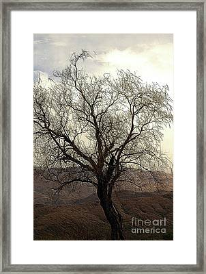 One Tree Framed Print by Kathleen Struckle