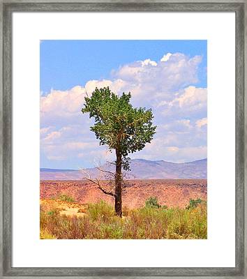 Framed Print featuring the photograph One Tree by Marilyn Diaz