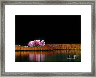 One Water Lily Framed Print by Sabrina L Ryan