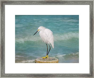 One With Nature - Snowy Egret Framed Print by Kim Hojnacki