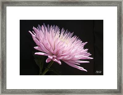 One With Reality Limited Edition Framed Print