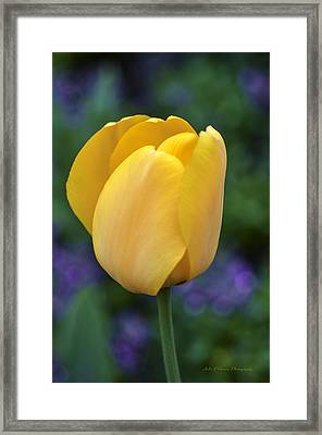 One Yellow Tulip Framed Print by Julie Palencia