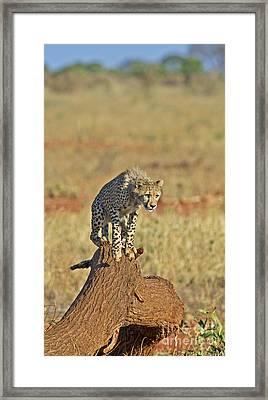 Onetwothree.... Jump... Framed Print by Nina Stavlund