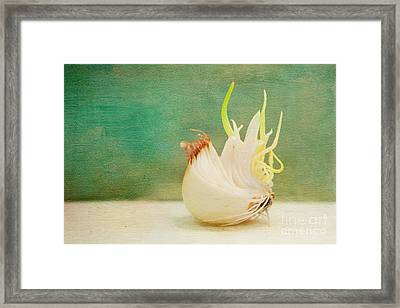 Onion Bird Framed Print by Kay Pickens