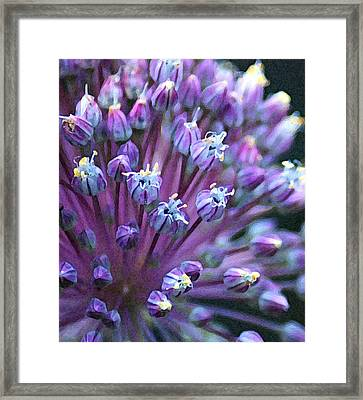 Framed Print featuring the photograph Onion Bloom by Kjirsten Collier