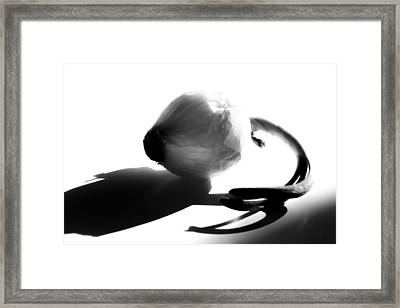 Onion Framed Print by Bob Orsillo