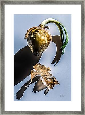 Onion Skin And Shadow Framed Print