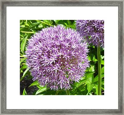 Onions Anyone Framed Print
