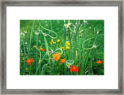 Onions Framed Print