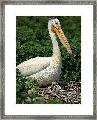 Only A Mother... Framed Print by James Peterson