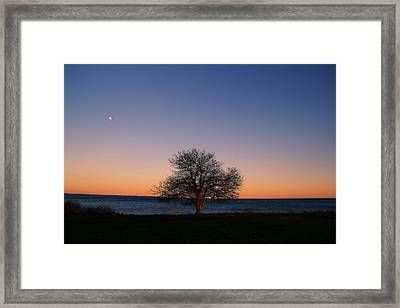 Only One Framed Print by Andrea Galiffi