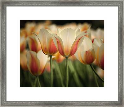 Only Tulips Framed Print by James Barber