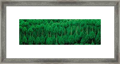 Onogo Kitayama Cedar Trees Kyoto Japan Framed Print by Panoramic Images