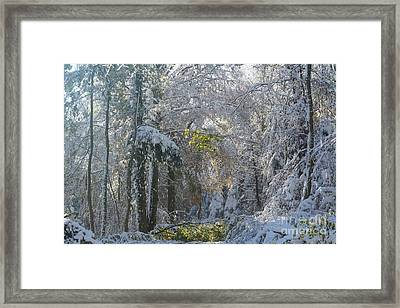 Framed Print featuring the photograph Onset Of Winter 1 by Rudi Prott
