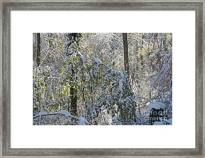Framed Print featuring the photograph Onset Of Winter 2 by Rudi Prott