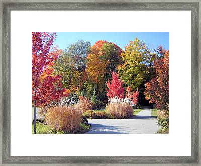 Ontario In The Fall Framed Print by Gaetano Salerno