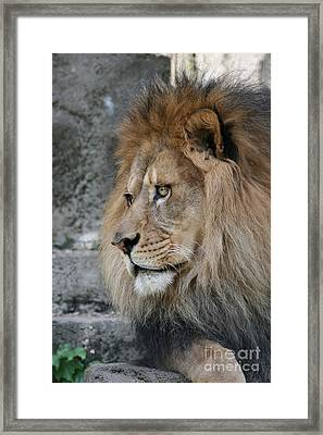 Framed Print featuring the photograph Onyo #11 by Judy Whitton