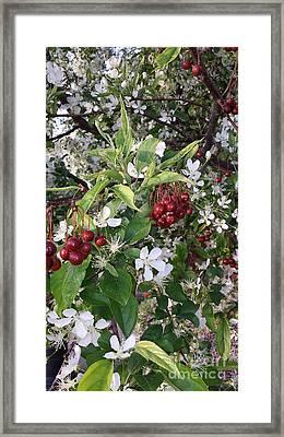 Oo Oo Oo Cherry Baby Framed Print
