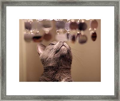 oo Shiny Framed Print