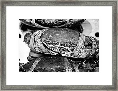 Ooh Crab - Black And White Version Framed Print
