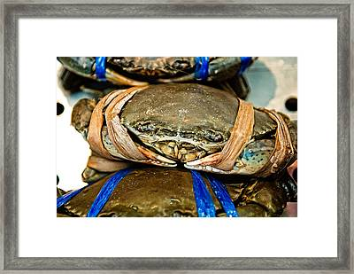 Ooh Crab Framed Print