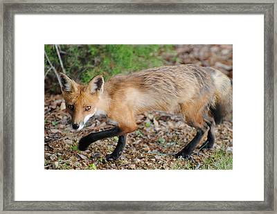 Oops I Did Not Know You Were There  Framed Print by Lyndall Hamlett