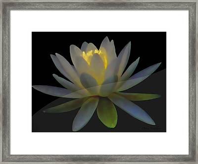 Opal Lotus Swish Framed Print by Debra     Vatalaro