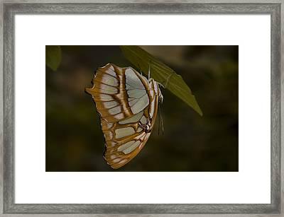 Opal Framed Print by Penny Lisowski