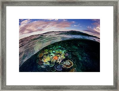 Opal Reef Off The Great Barrier Reef Framed Print