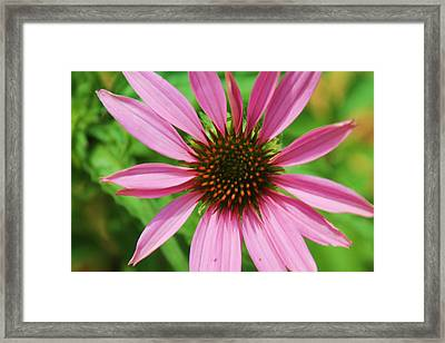 Framed Print featuring the photograph Open Bloom by Alicia Knust