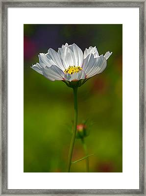 Framed Print featuring the photograph Open For All by Byron Varvarigos
