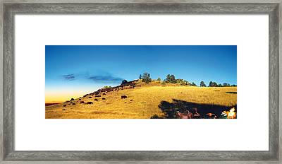 Open Range Framed Print by Ric Soulen