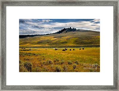 Open Range Framed Print by Robert Bales