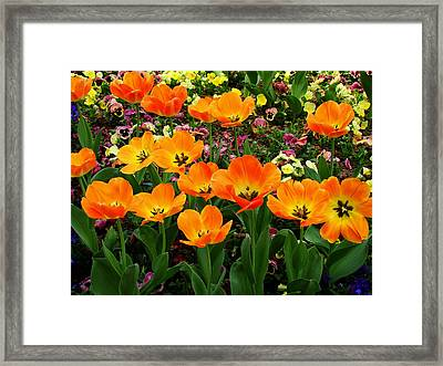 Open Framed Print by Rodney Lee Williams