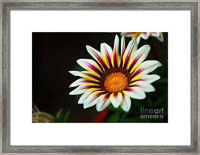 Opening Sensation Framed Print by Syed Aqueel