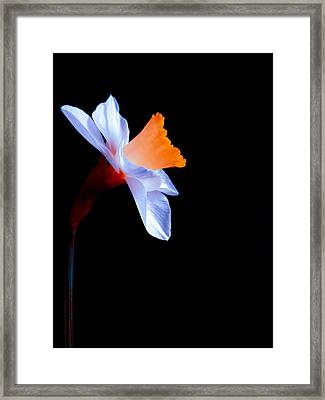 Opening To The Light Framed Print