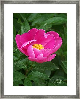 Framed Print featuring the photograph Peony  by Eunice Miller