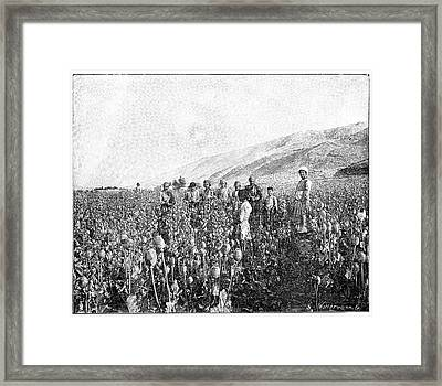 Opium Farming In Persia Framed Print by Science Photo Library