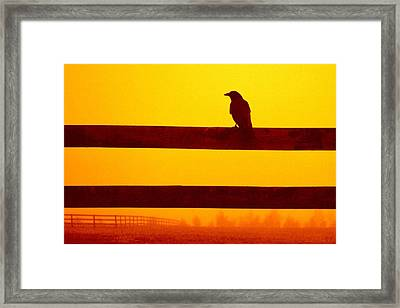 Opportunist In Orange Framed Print
