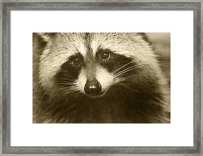 Opportunist Framed Print