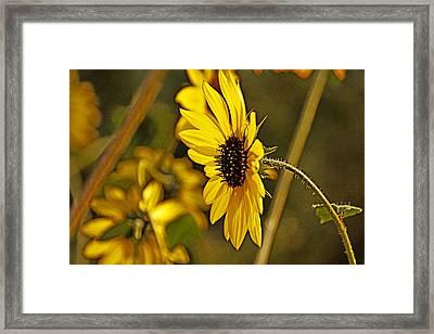 Opposite The Sun Framed Print