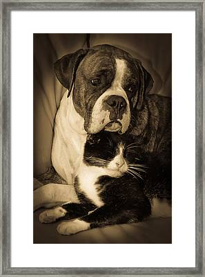 Opposites Attract Framed Print by DigiArt Diaries by Vicky B Fuller