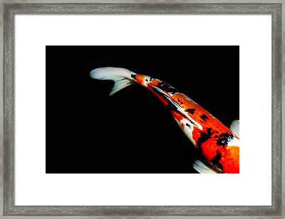 Orange And Black Koi Framed Print