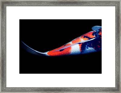Orange And Black Tail Koi 2 Framed Print